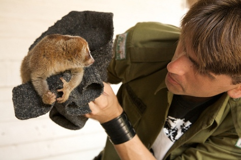 Channee with a rescued slow loris