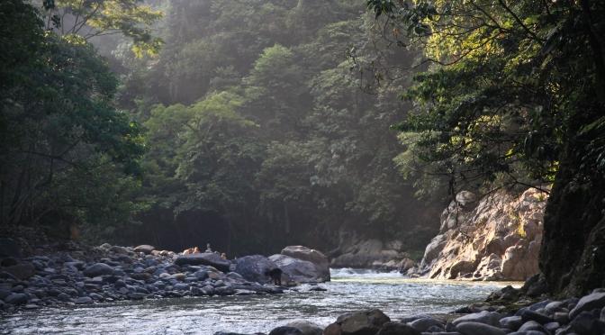 The Bare Necessities: Gunung Leuser National Park