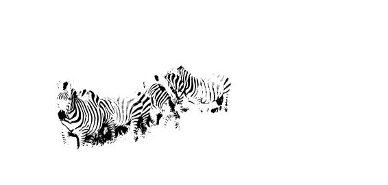 Zebras in the Serengeti | Photo by Angela Jelita Richardson